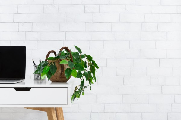 crop_sm_minimalistic-home-office-workplace-with-houseplant-3RNKBJC